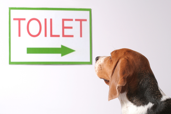 How to Effectively Potty Train Your Puppy